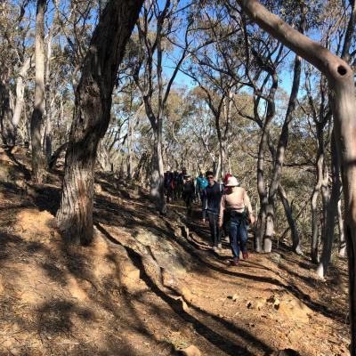 Black Mountain 2 June 2019 Singleton IMG 4053