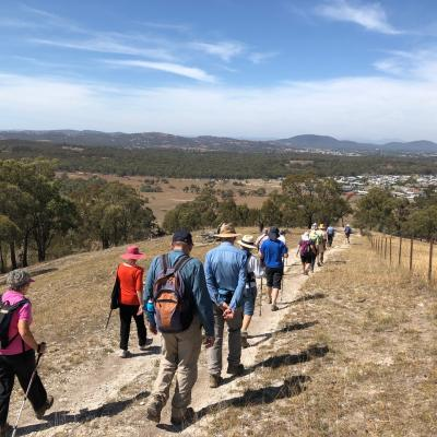 Mulligans Flat North 8 March 2019 Singleton IMG 2924