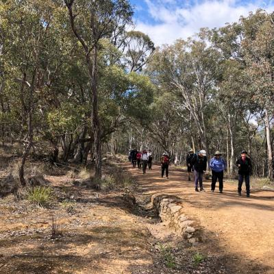 Aranda Bushland 11 October 2019 Singleton IMG 6588