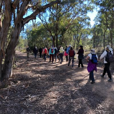 Aranda Bushland 22 May 2019 Singleton IMG 3961