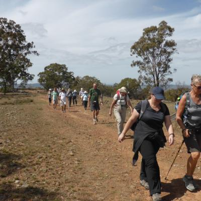 Majura Saddle and Mt Ainslie 28 March 2019 Welsh