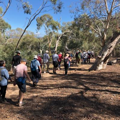 Weston Park to Stirling Ridge loop 20 March 2019 Singleton IMG 3213