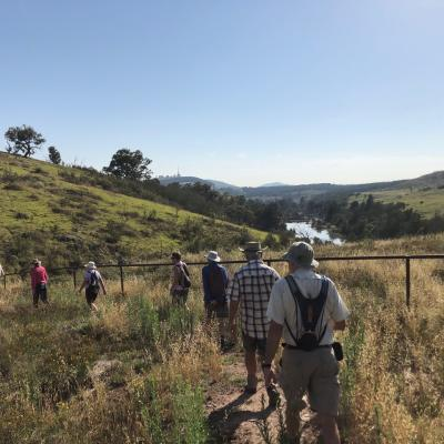 Woodland Track Molonglo 30 January 2019 Singleton IMG 2591