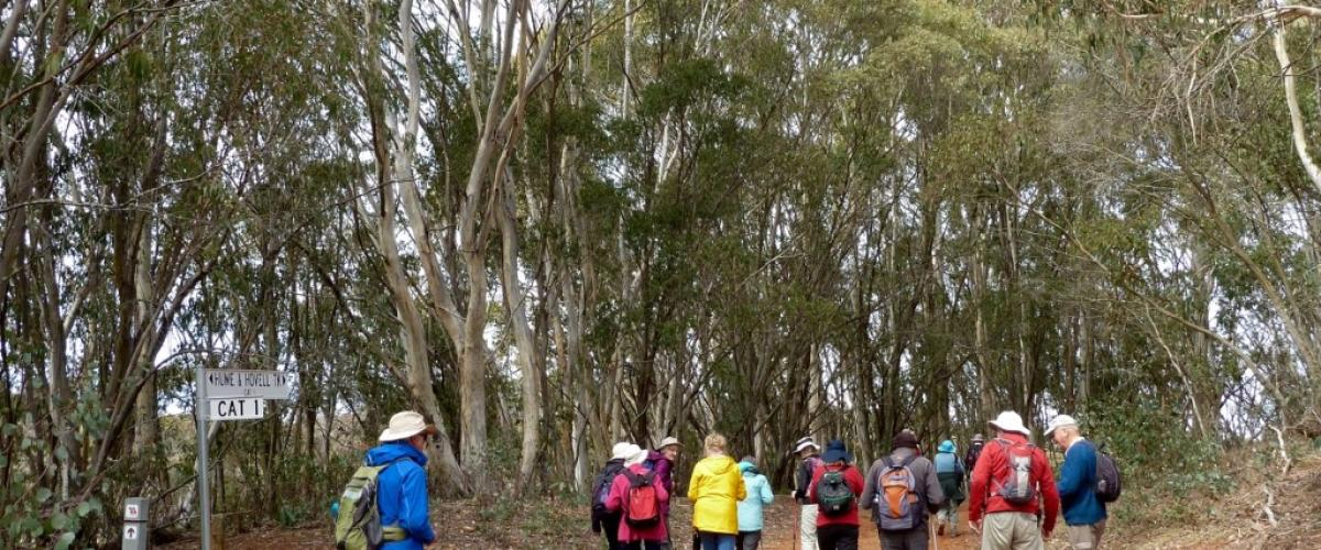 Hume and Hovell Track, Sept 2017